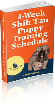 4 week Shih Tzu puppy training schedule