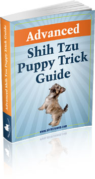 Advanced Shih Tzu Puppy Trick Guide