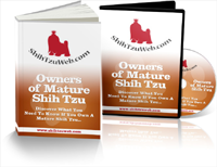 ShihTzuMature