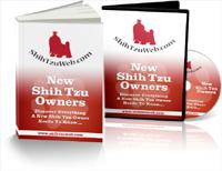 new-shihtzu