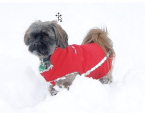 Shih Tzu Red Dress