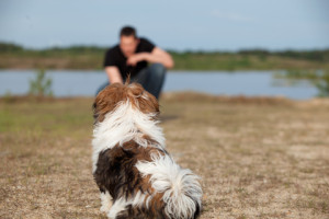 Shih-Tzu-Training-How-To-Stay-Command