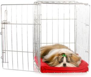 ShihTzu in a crate