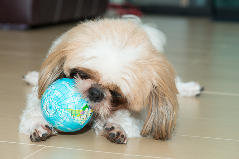 Shih Tzu Mind Training Interactive Dog Toys